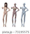 筋肉標本 女性 perming3DCGイラスト素材 73195575