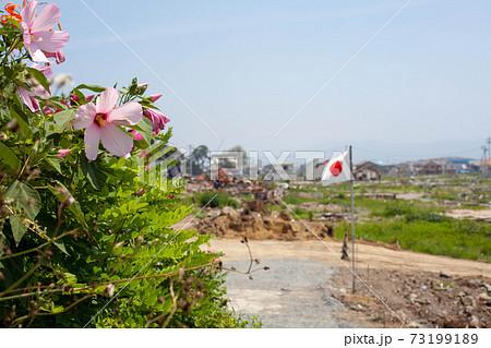石巻の被災地で咲くハイビスカスと、なびく日章旗 73199189