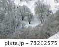 雪国の冬、里山には白いブナ林 福島県只見町 73202575