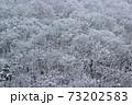 里山の冬木立に雪積もる-道の駅きらら289 福島県南会津町 73202583