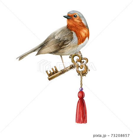 Robin bird with vintage golden key watercolor illustration. Elegant hand drawn romantic decoration on white background. Hand drawn realistic garden bird hold retro style metal key with red pendant. 73208657