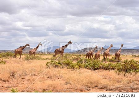 サンブル自然保護区の景色(ケニア) 73221693