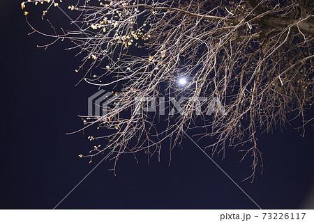 静寂の中で月が照らす幻想的な景色 73226117