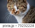 猫の目 73232228
