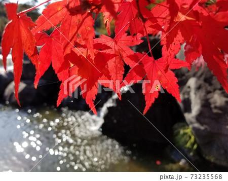 京都のけいはんな記念公園の紅葉と池 73235568