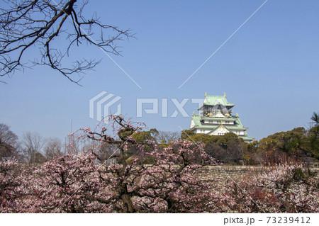 早春の大阪城-3、華やぐ梅林の彩との共演風景 73239412