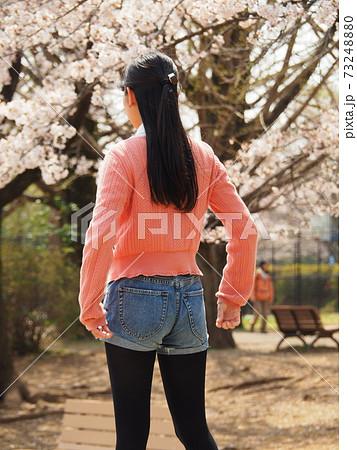 満開の桜を見ている桜色のセーターの若い女性の後ろ姿 73248880