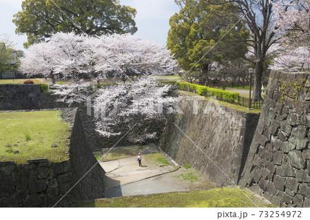 熊本城竹の丸からの駆け上がり石垣と桜 73254972