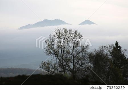 雲海に沈みゆく山を見ている枯れ木 73260289