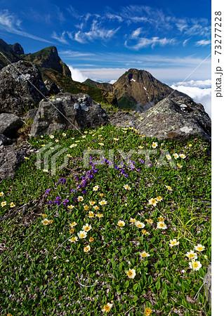 八ヶ岳連峰・横岳稜線の高山植物と大同心・阿弥陀岳 73277228