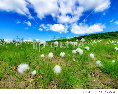 春の湿原 ふわふわの雲とワタスゲ 73287078
