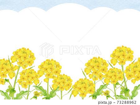 菜の花 アブラナ 春 背景 フレーム 水彩 イラスト 73288962