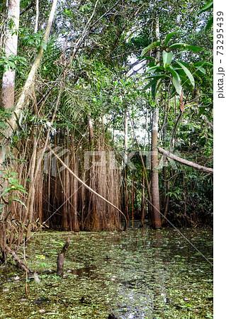南米ペルーのイキトスのアマゾン奥深くの動植物と風景 73295439