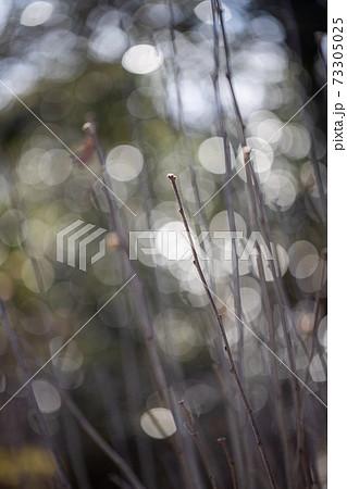 寒々しい冬の枯れた木の枝 73305025