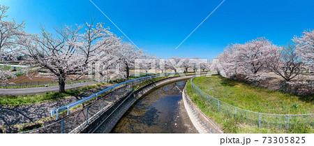 空撮「埼玉県」見沼田んぼの桜回廊 73305825