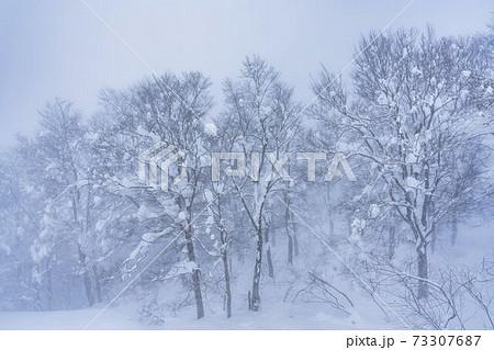 霧雪が降る森の風景 山形県山形市 73307687