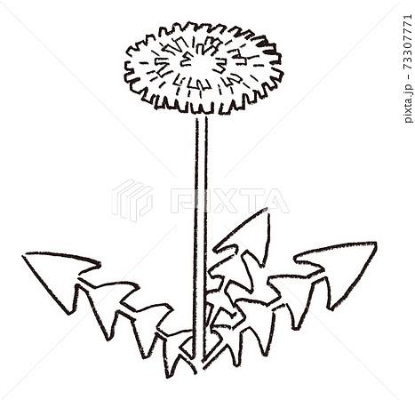 タンポポの手描き線画ベクターイラスト 73307771