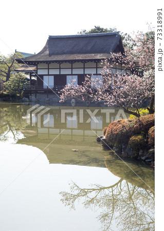 平安神宮栖鳳池、満開の紅梅と尚美館 73318991