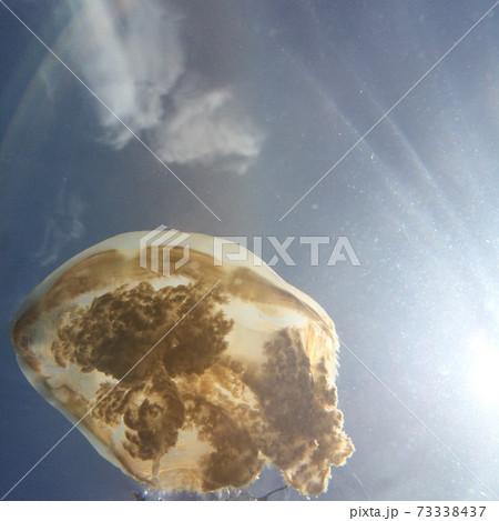 パラオのジェリーフィッシュレイクのクラゲと太陽 73338437
