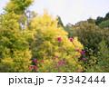 サルビアの花 インヴォルクラタ 73342444