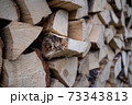 Woodpile with fireplace wood stacked 73343813
