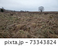 Dry withered grass in the water in late autumn 73343824