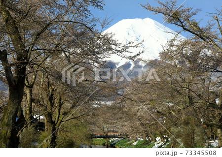 早春の富士山と残雪の忍野八海 山梨県忍野村 73345508
