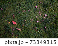 Autumn foliage on green grass, natural background top view 73349315