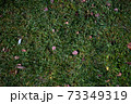 Autumn foliage on green grass, natural background top view 73349319