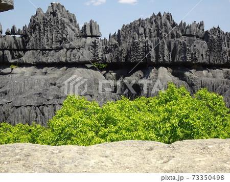 マダガスカル・ベマラハ国立公園大ツィンギーの奇岩と木 73350498