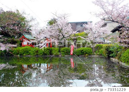 【京都】春の神泉苑 桜が映る法成就池 73351229