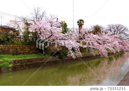 【京都】春の伏見稲荷近辺 満開の桜が映り込む琵琶湖疏水 73351231
