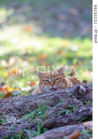 野良猫 猫 73356766