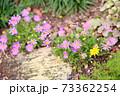 デイジーの花 73362254