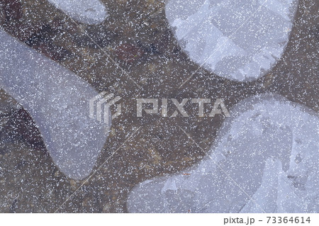 水面が薄っすらと凍り付いた表情 写真素材 73364614