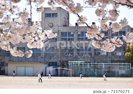 満開の桜の下校庭で野球をする少年少女 73370275