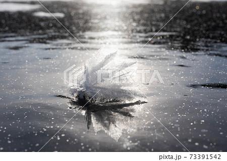 阿寒湖のきらめくフロストフラワー 73391542