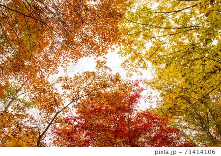 赤・黄・オレンジ3色の紅葉の競演 73414106