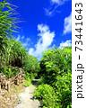沖縄の海へと続く道 73441643