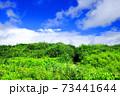 木のトンネルと青い空 73441644