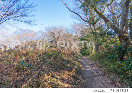 八俵山から高麗山への登山道(高麗山公園ハイキングコース) 73447333