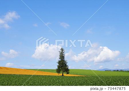 美瑛の風景 73447875