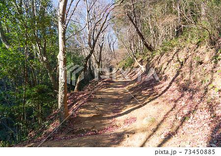 網代弁天山の登山道(東京都あきる野市) 73450885