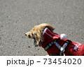 冬のお散歩 ミニチュアダックス 73454020