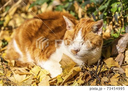 日向ぼっこをしながら昼寝をする猫 73454995