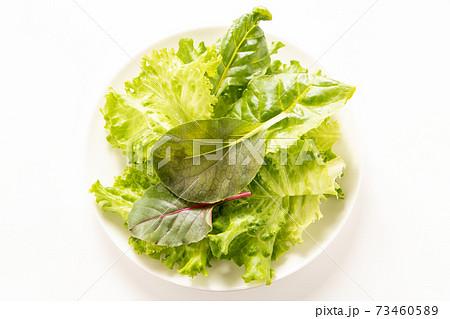 葉物野菜盛り合わせ。 73460589