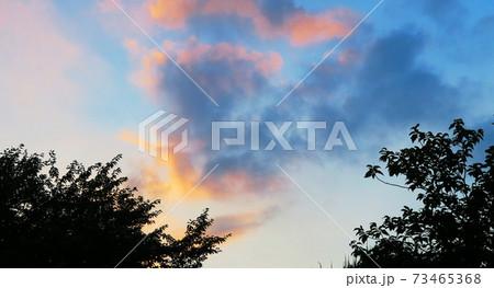 埼玉県川口市付近の夕焼け空と樹木の風景 73465368