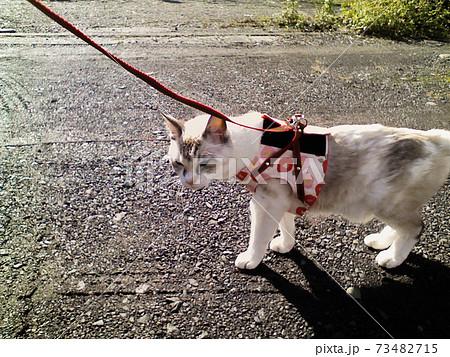 ベストを着てゆっくりとお散歩するシニア猫 73482715