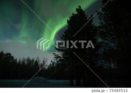 森の中で見るオーロラ鑑賞、北極キツネと共に見るオーロラ鑑賞 73483513