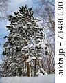 冬の自然ドライブ 73486680